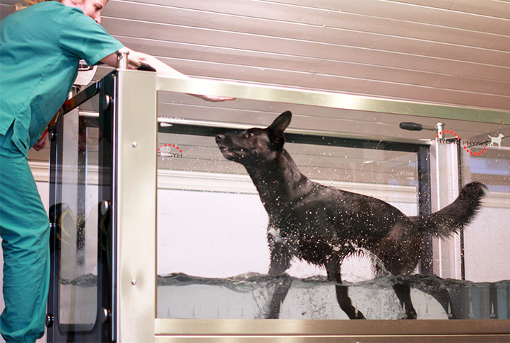 rehabilitering dyr