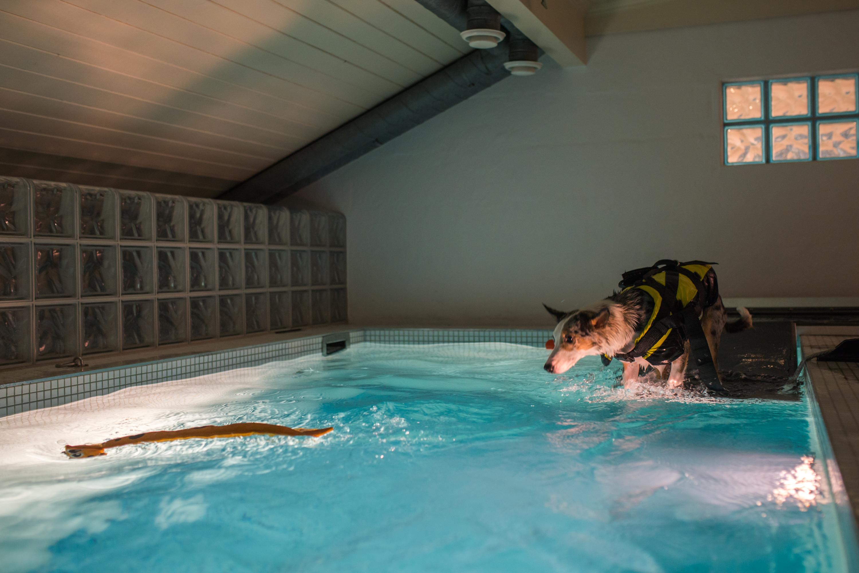 rehabilitering hund