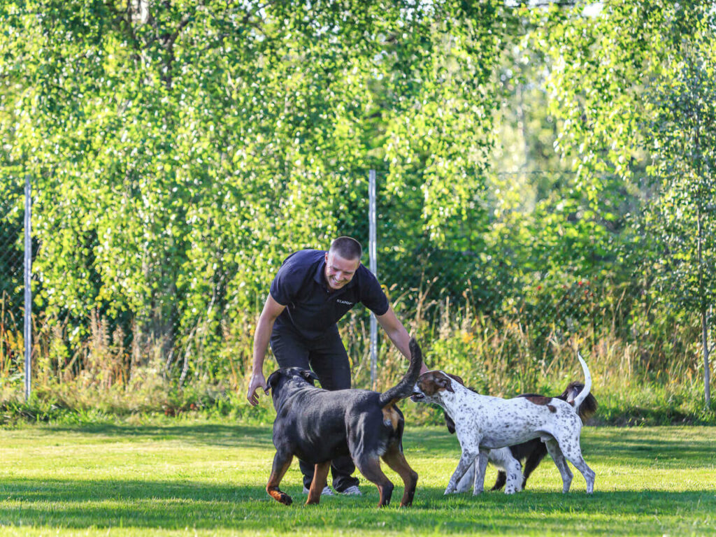 hundetrening